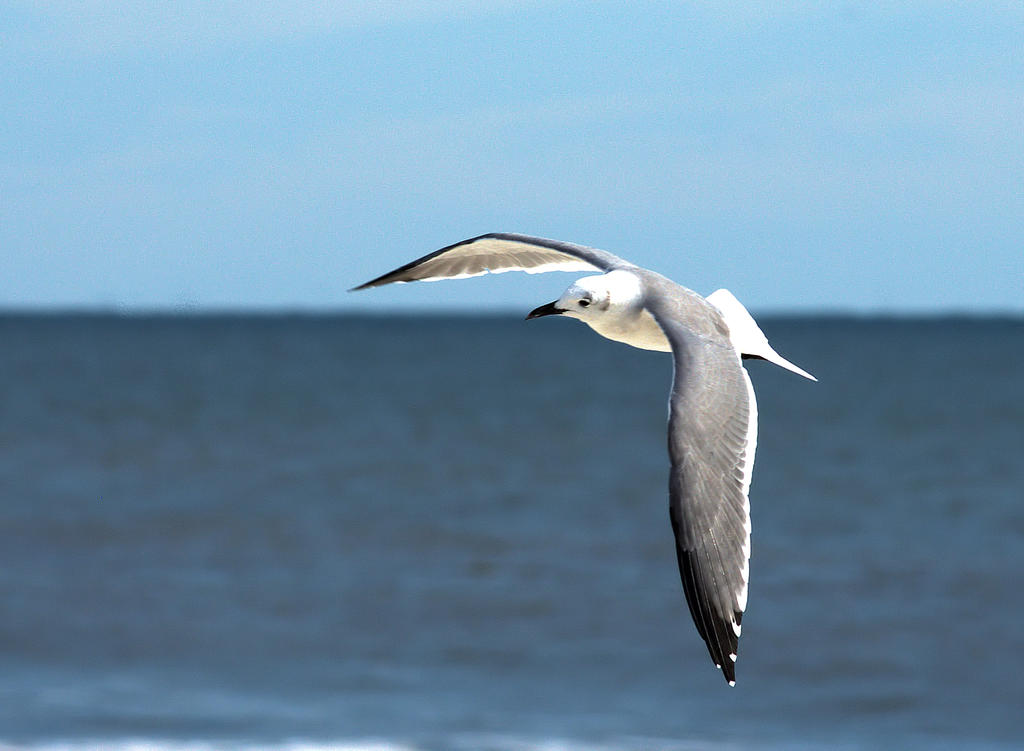 Wing Shot by TThealer56
