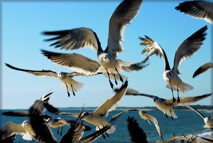 The Birds by TThealer56