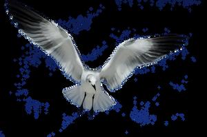 Seagull Stock by TThealer56