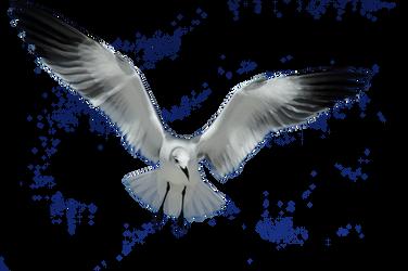 Seagull Stock
