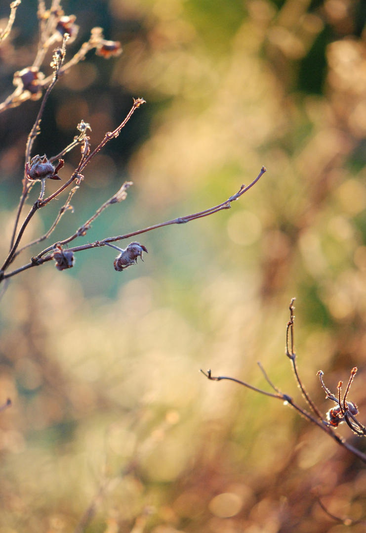 Softness of pastel by MarteRavn