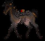 2405 Padro Foal Design