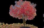 Isolated-tree-1 Luminous Dark