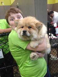 Me with chow chow puppy