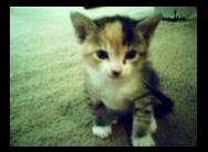 an angel kitten by theashleybaka