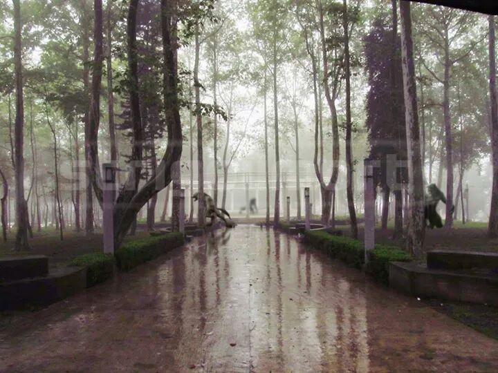 Parque con Lobos m by StrigoiiMort