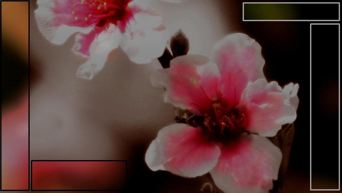 Flower Box by MystikAngel