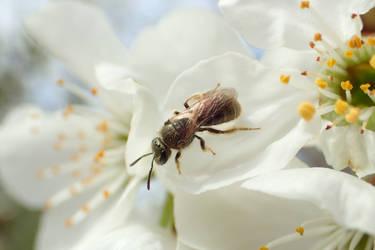 Bee by Tibbers4U