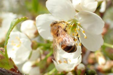 Bee2 by Tibbers4U