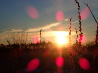 Sunset by Tibbers4U