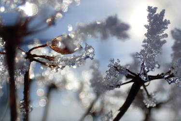 Frosted crystal Chandeliers by Tibbers4U