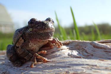 Tree frog#2 by Tibbers4U