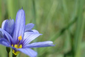 IDK, sum frigging flower I found.