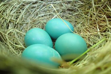 Robbin eggs by Tibbers4U