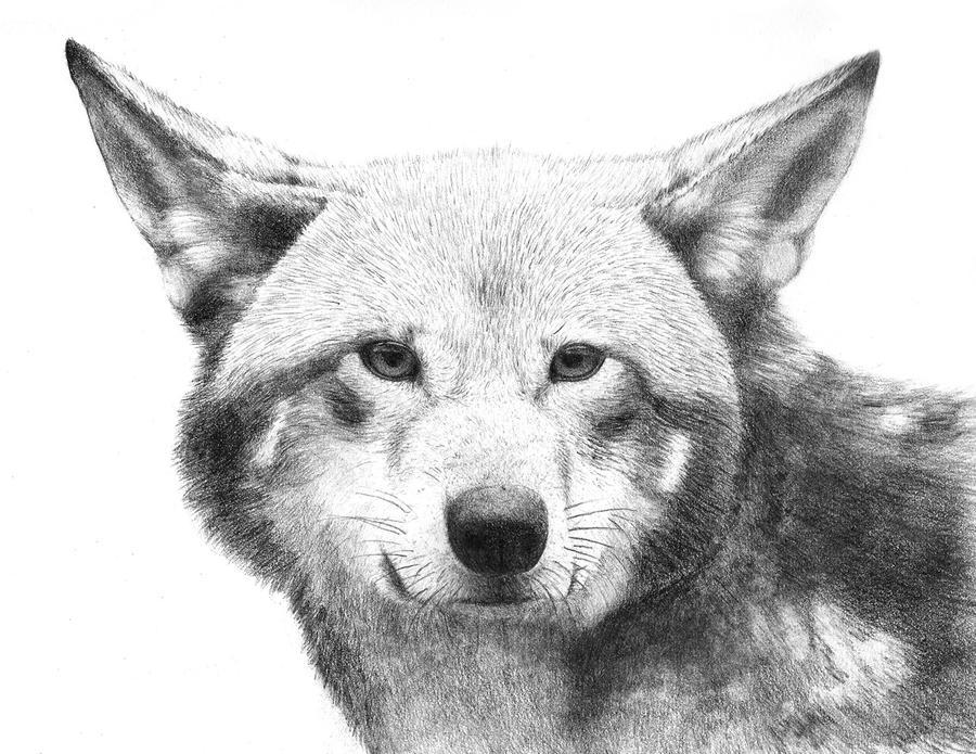Wolf by vaksine
