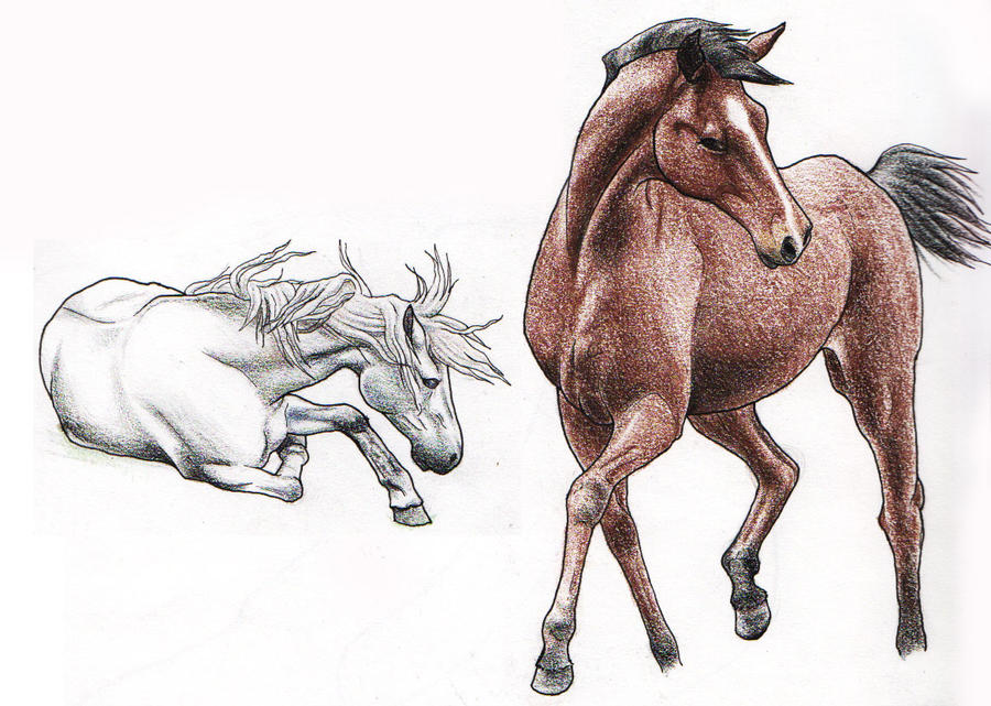 Realistic Horse Sketch...