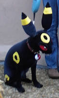 Umbreon Costume by leafeon-ex