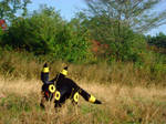 Real Umbreon 2