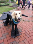 Smiley Dog in Costume