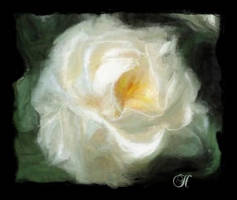 A White Rose by SuliannH