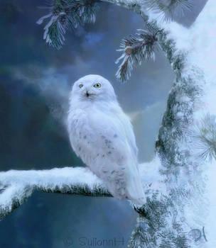 Winterland Snowy Owl by SuliannH