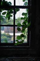 Window by octofinity