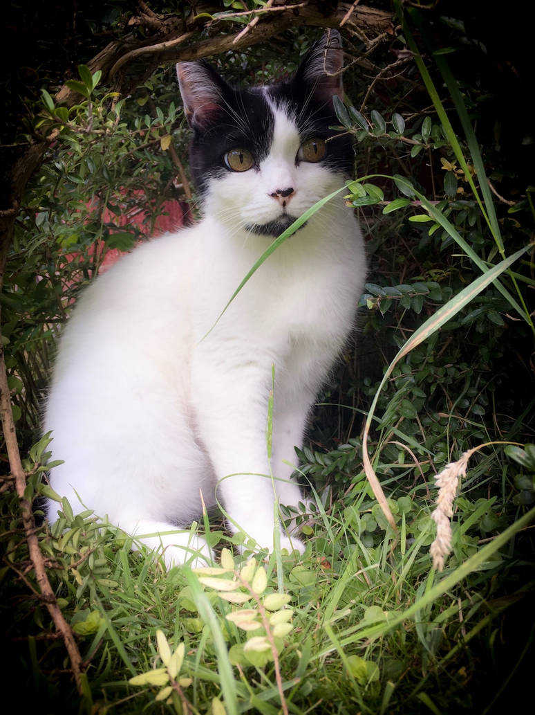Animal A-Z: Cat by rainylake on DeviantArt