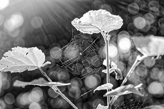 Light around the web