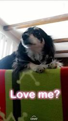 This dog  by GingerDoraDaExplorer