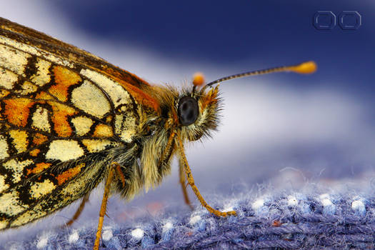 oLD bUTTERfLY