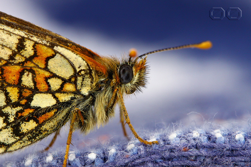 oLD bUTTERfLY by NENE00