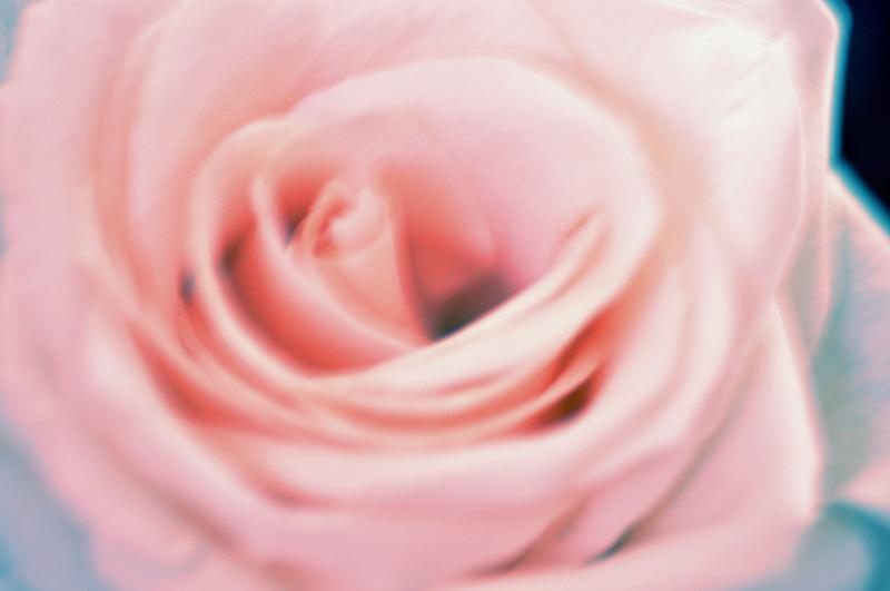 no guns, get roses by das-kleine-herz