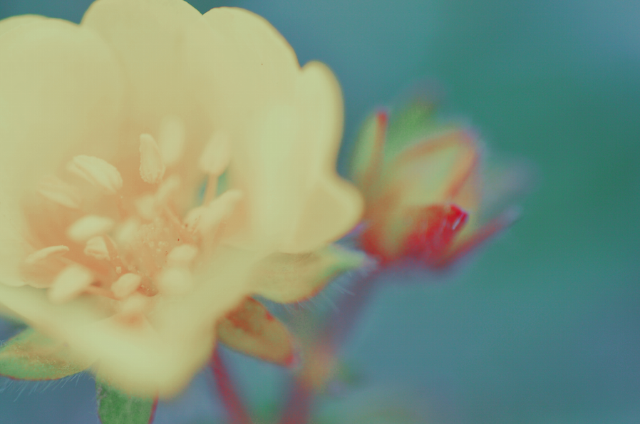 flower by das-kleine-herz