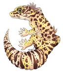 {T} Gecko Friend