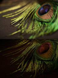Funky Feathers by kikyou13