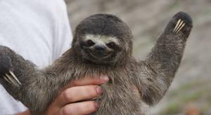 Check it out, I'm a Sloth.