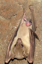 New Bat Arrives by Entophile