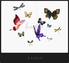 Pack Butterflies 11 Png by Hanyu-Hi