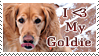 Golden retriever Fans - Stamp by kilgore-trout