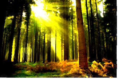 Forest by SerpentMistress