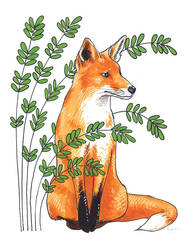 Fox by claireingram