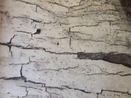 Wood Cracks