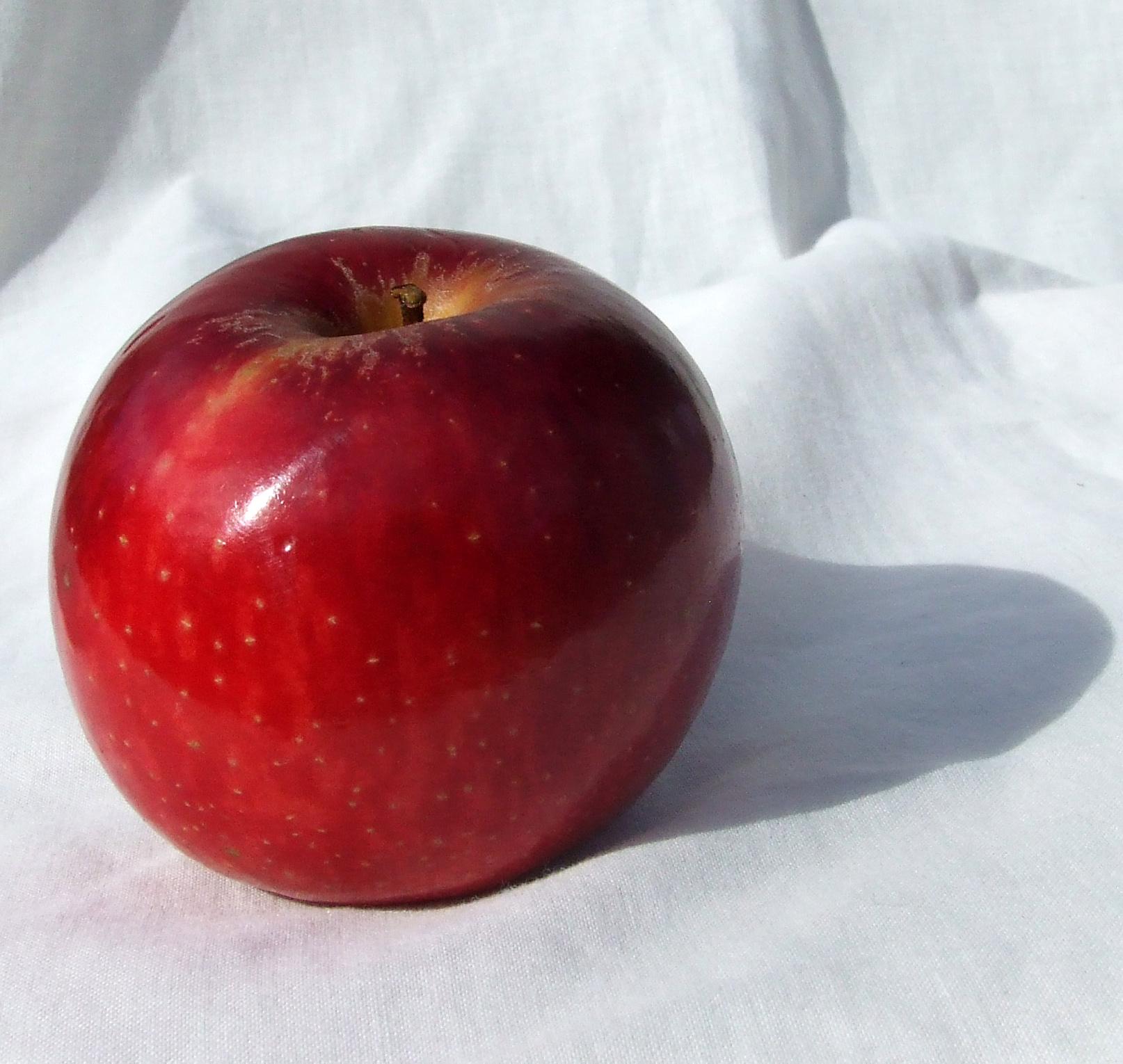 Apple's Twin