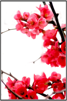 Japan_Flower_by_joganelken.jpg
