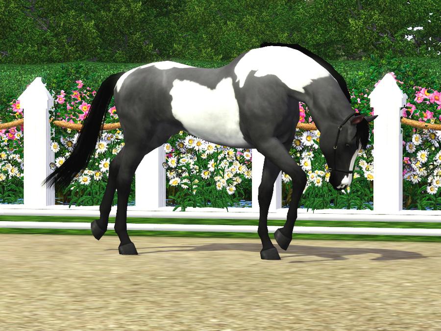 stars miniatures horses