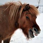 Pony Stock: Talking Horse 7