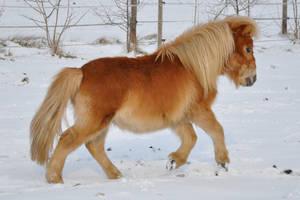 Pony Stock: Running Away 3 by thevirtualgaucho