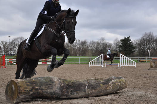 Horse Stock: Jumping