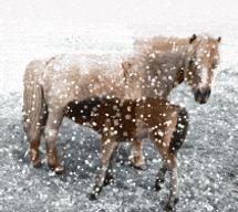 Animation: Snow in Dartmoor by thevirtualgaucho