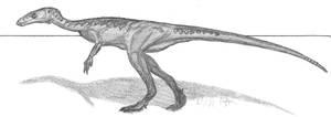 Eocursor parvus